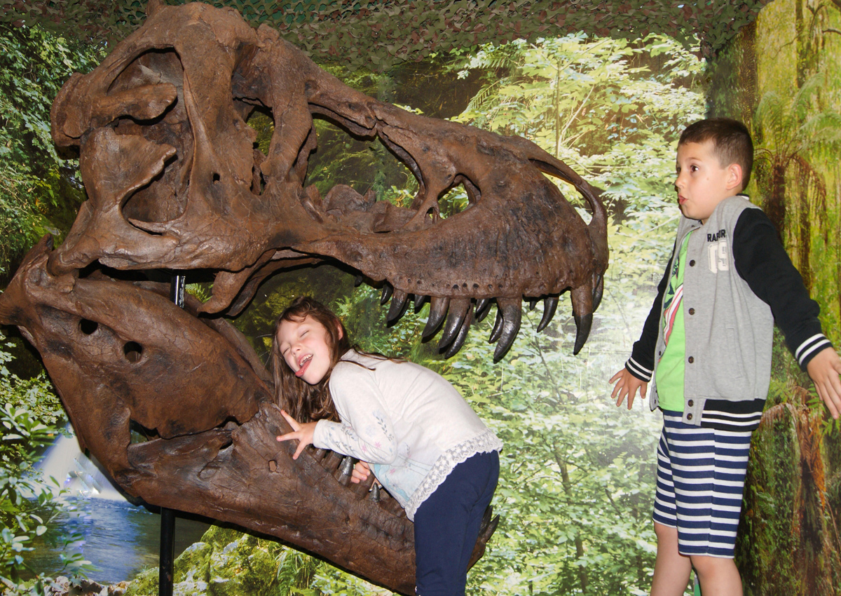 Dinosaur World, Torquay - Dog Friendly visitor attraction