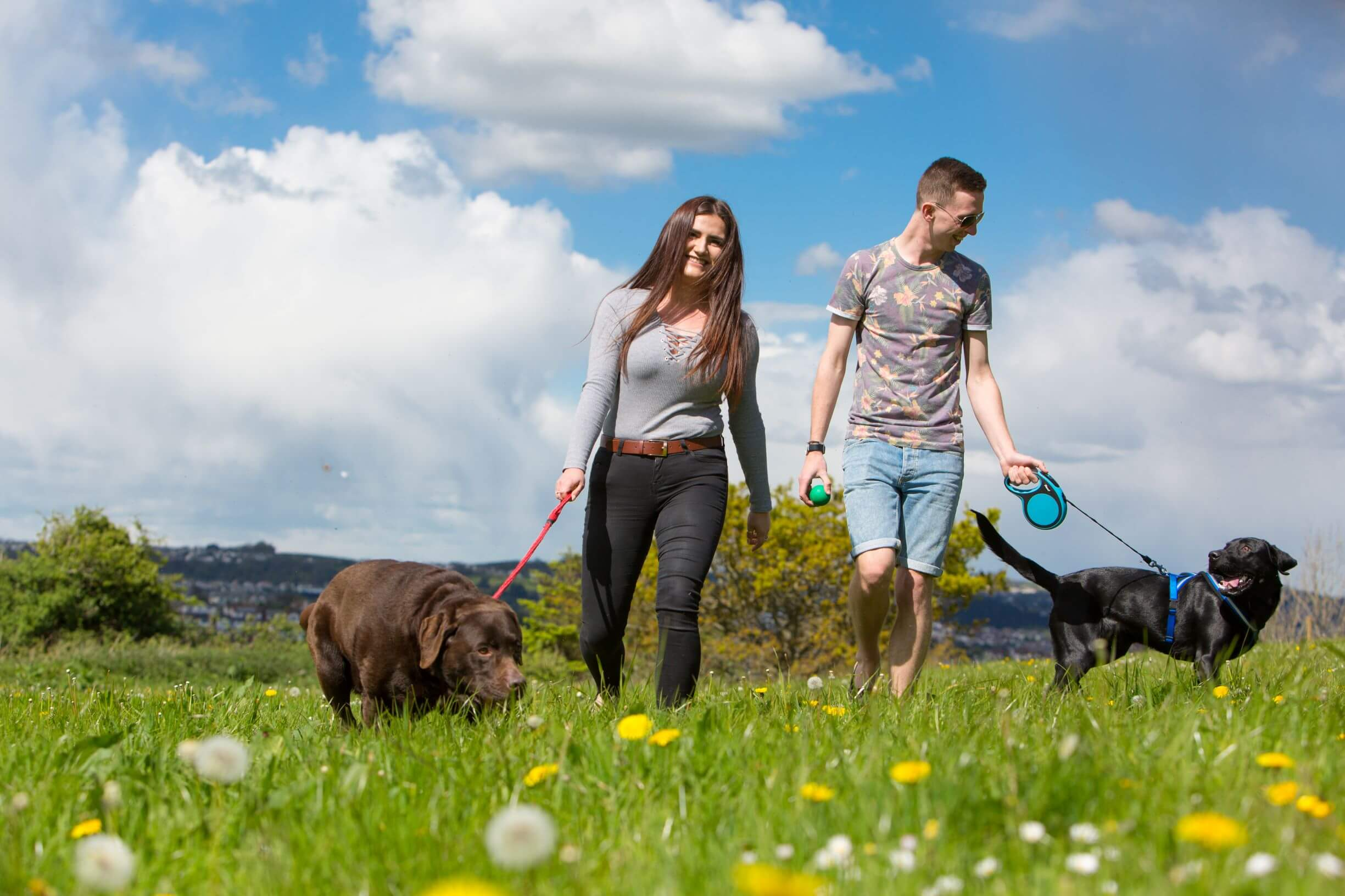 Dog Friendly Breaks in Torquay